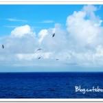 【沖繩@麗星郵輪】海鷗飛呀飛
