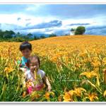 [花蓮玉里] 赤柯山金針花季~ 滿山遍野金黃花海