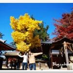 奈良東大寺~世界最大的木造建築