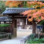 [宇治] 宇治神社、宇治上神社~ 日本現存最古老的神社建築,環境自然肅穆