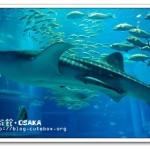 [大阪景點] 大阪海遊館~ 世界最大級的水族館