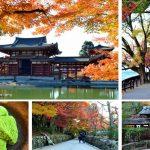 宇治一日遊,用悠閒的步調暢遊抹茶與源氏物語的故鄉