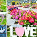[彰化員林] 琉璃仙境~ 美麗花海結合夢幻婚紗場景,拍照打卡新亮點!