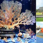 [宜蘭蘇澳] 綺麗博物館~ 絢麗奪目珊瑚寶石,全台最大珠寶觀光工廠