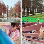 [雲林景點] 古坑鹿營親子農場~滑草戲水及戶外遊戲區,漫步夢幻落羽松林